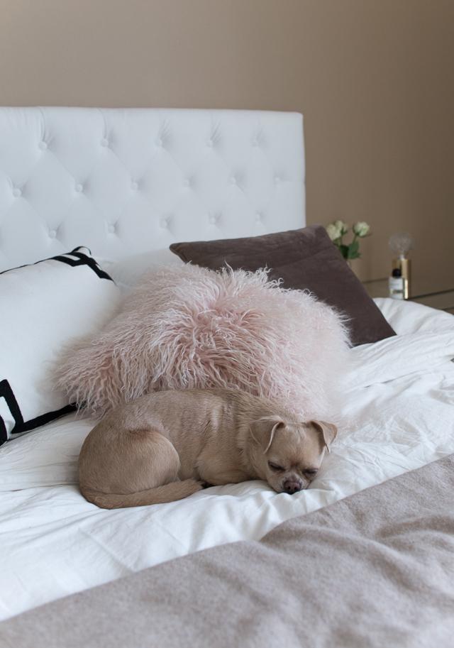 Villa H, koira, chihuahua, makuuhuone, interior, sisustaminen, jotex samettinen sängynpääty