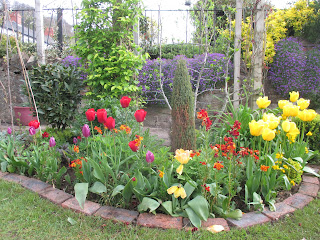 Rainbow bed with tulips of purple, red, orange and yellow