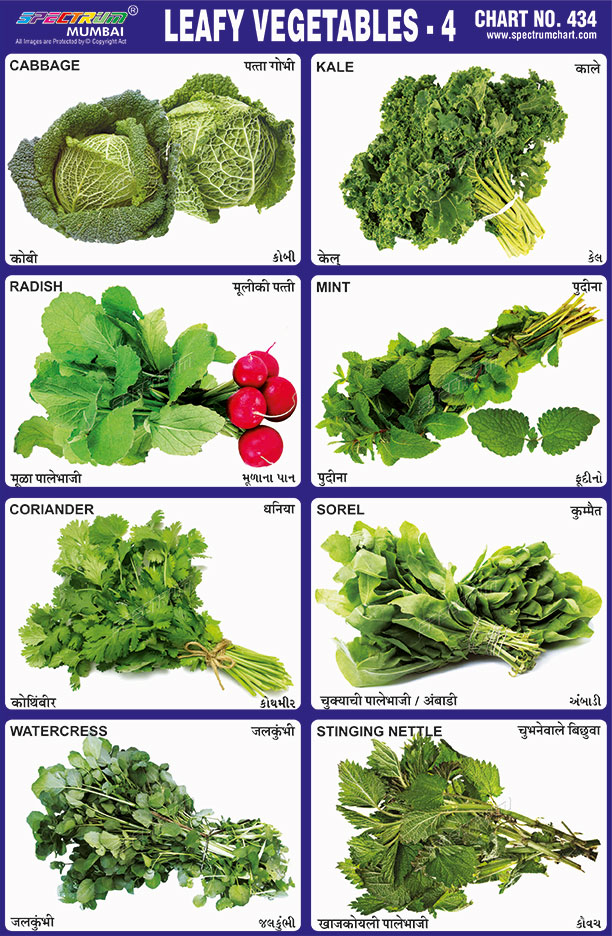 what are leafy vegetables pdf