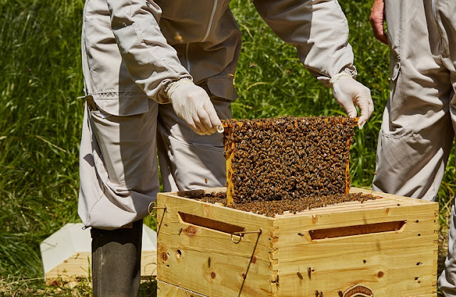 Μελισσοκομικό Πρόγραμμα 2017: Οδηγός υλοποίησης