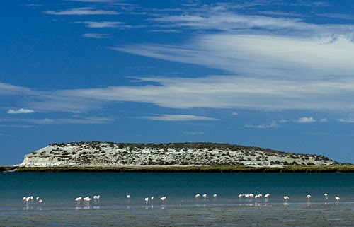 Flamencos en la Isla de los Pájaros
