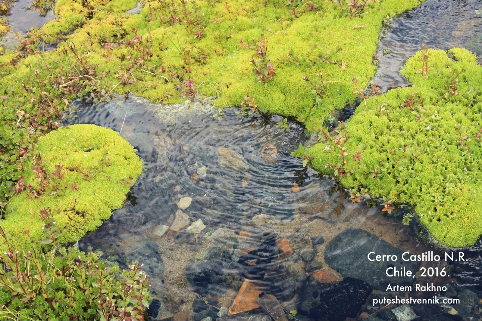 Ручей и мох в Чили