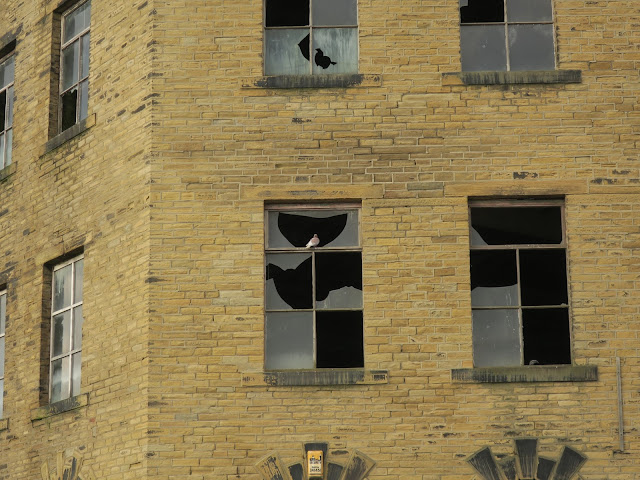 Pigeon sits on broken glass of window to look into an old mill.