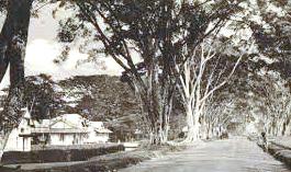 Gambar Sejarah Wonosobo Lengkap