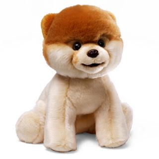 World's Cuteness Dog