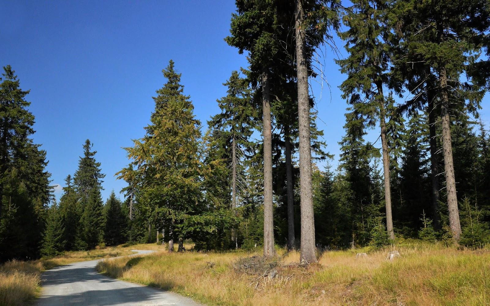 Szlak niebieski na Jagodną