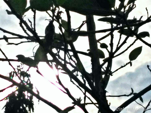Image: Sunlight beauty branches