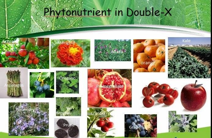 Thành phẩn của Nutrilite Double X Amway giá rẻ nhất tại TPHCM