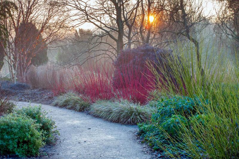tallos rojos en jardín de invierno