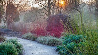 Foto del día: Jardín de invierno y Cornus alba 'Sibirica' en Hillier Gardens