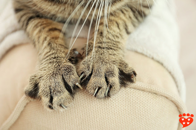 If you provide the right scratching posts, cats will  use them and it will help stop them from scratching the settee, like this tabby cat