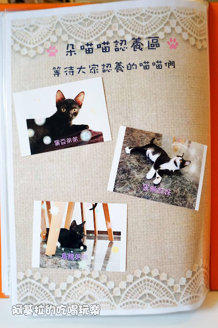 14589755 1099288990124345 2120589815411100781 o - 熱血採訪 朵貓貓咖啡館 - 貓咪餐廳