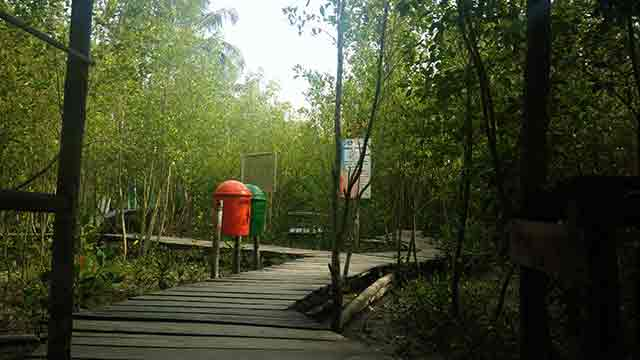 wisata taman mangrove mempawah