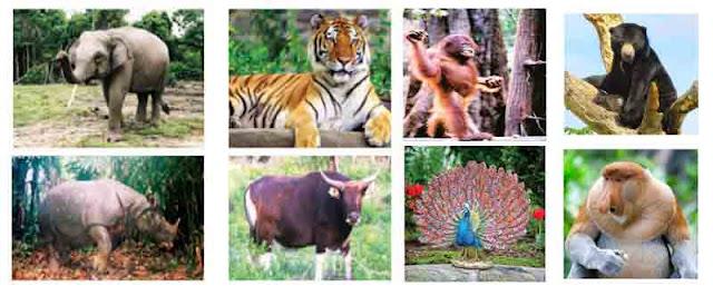 Contoh fauna asiatis