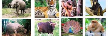 Fauna tipe Asiatis, Fauna tipe Peralihan dan Fauna tipe Australis