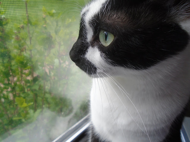 Fiona, happy cat in the window
