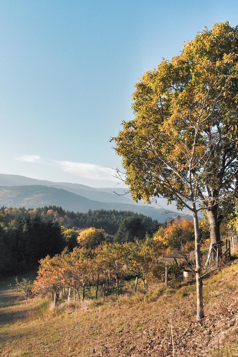 Paysage automnale en ardèche à la lisière de la forêt