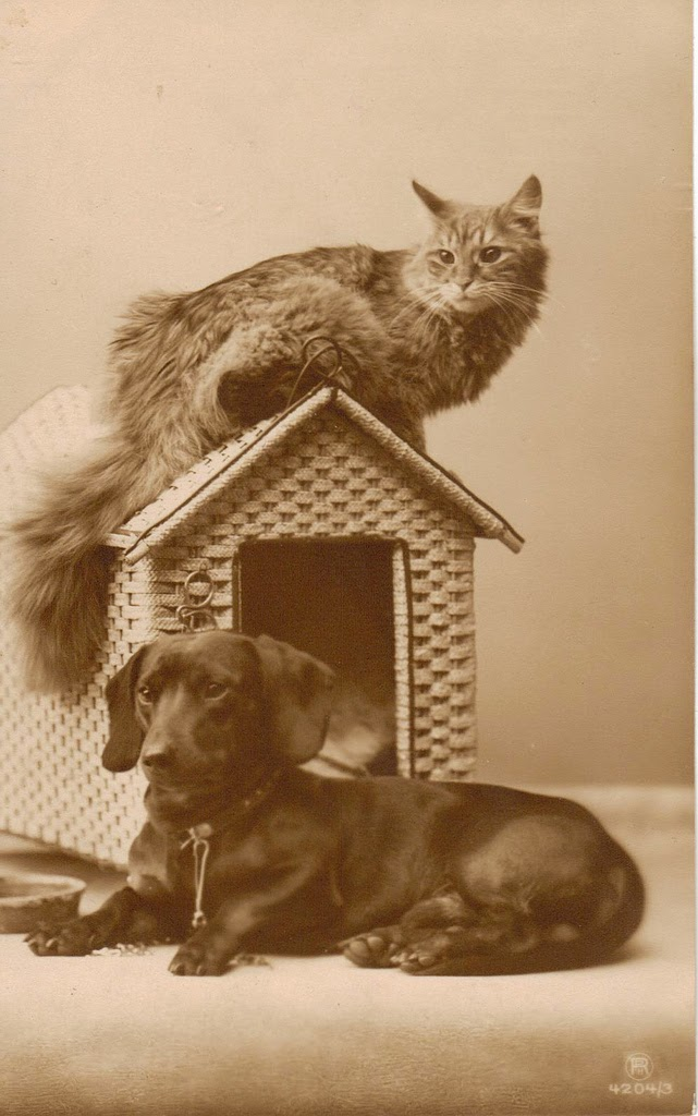 25 Adorable Vintage Photos of Dogs and Cats Together  vintage everyday