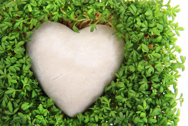 فائدة فوائد الجرجير للجمال والصحة watercress-health.jp
