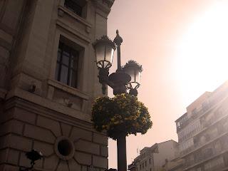gorjeo blanco pecho enorme en Granada