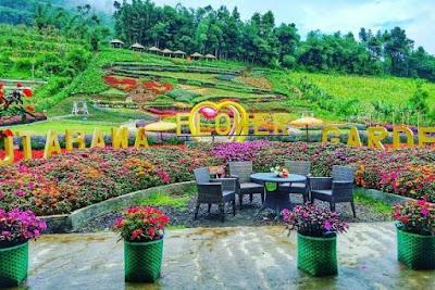 Kebun Bunga Krisan Wonobodro, Kabupaten Batang