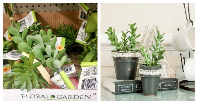 Dollar tree succulents