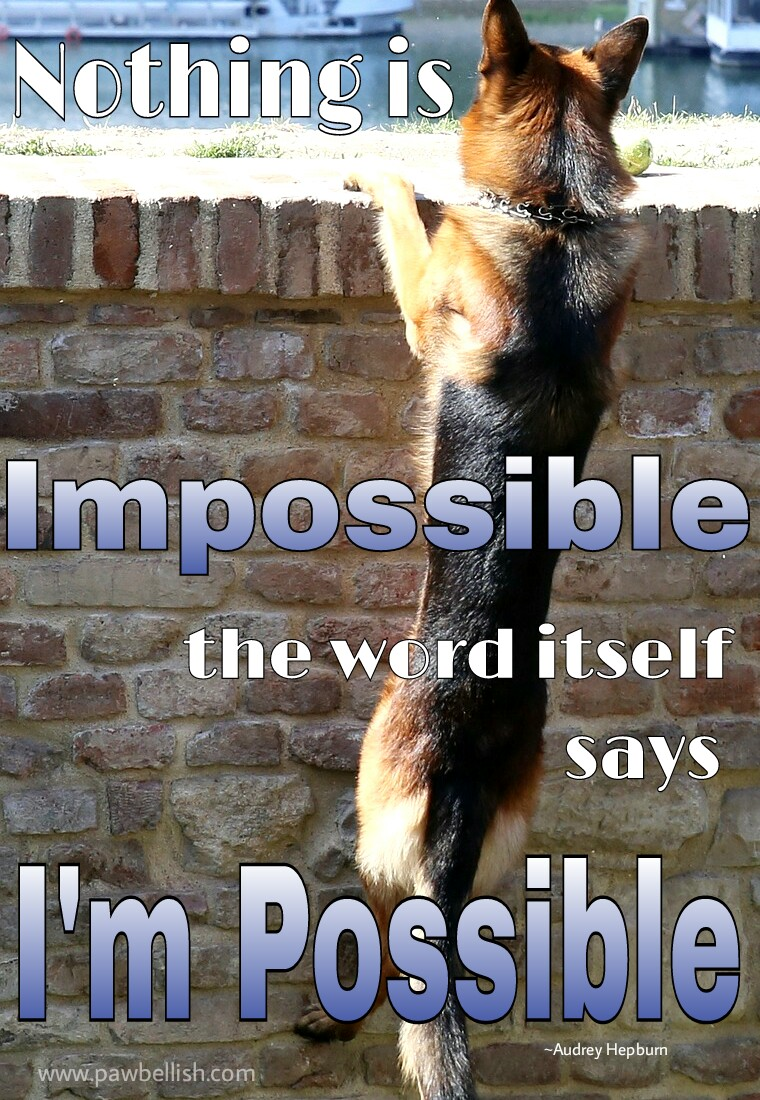 Dogs interpretation of the Audrey Hepburn quote, Nothing is impossible, the word itself says I'm possible.