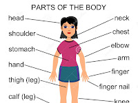 Parts of the Body Materi Bahasa Inggris SD Kelas 5