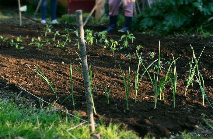 fotografía de un huerto recién plantado