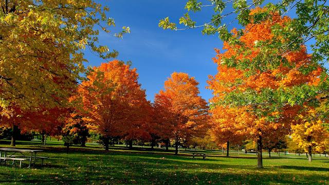 Bomen met herfstbladeren in de herfst