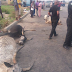 Man Accidentally Rams His Car Into A Herd Of Cows And Then This Happened To Him (Photos)
