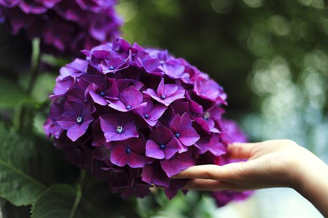 hinh anh dep hoa cam tu cau4