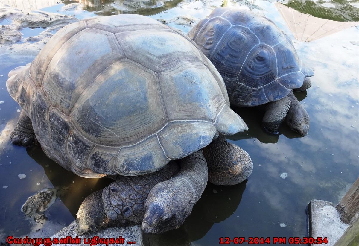 Galapagos And Aldabra Tortoise Exploring My Life