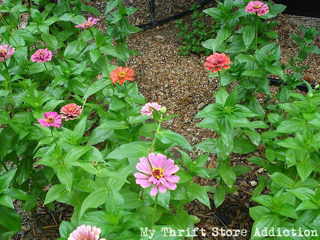 low maintenance garden tips