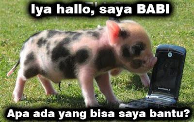 panggilan babi