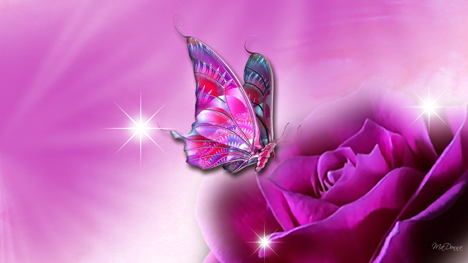 Hd Butterflies Pink Butterfly On Purple Flower Wallpaper