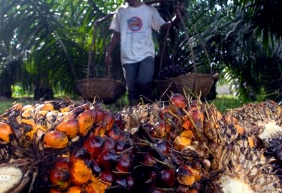 patani kelapa sawit disarankan bentuk kelompok tani