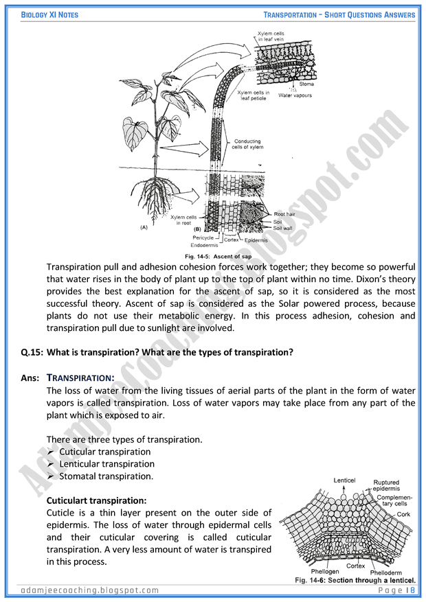transportation-short-question-answers-biology-11th