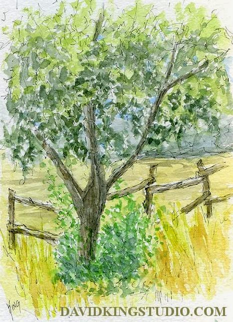 art sketch plein air pen watercolor tree fence park