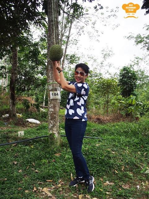 Harvesting Musang King at Durian Wonderland
