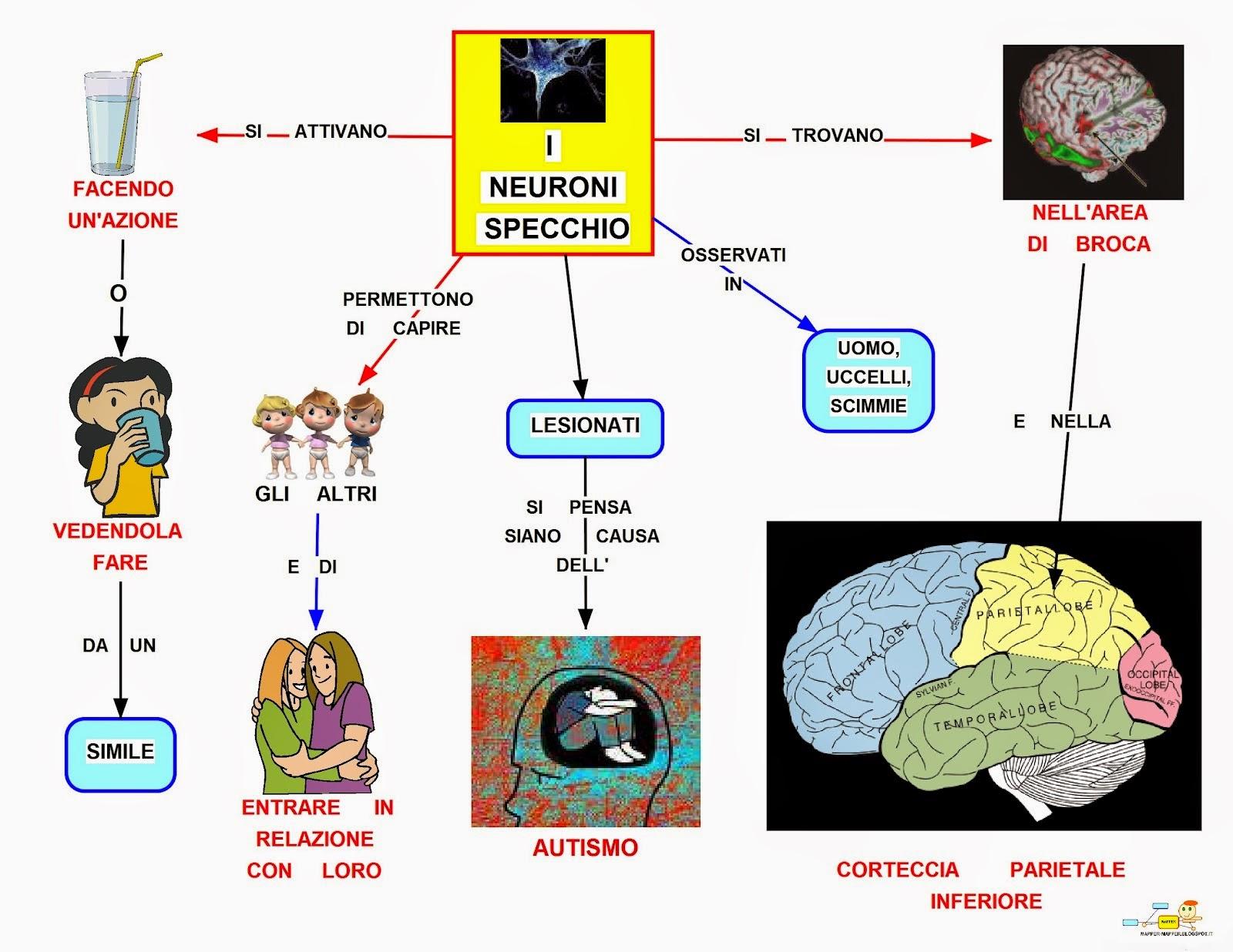Mappa concettuale neuroni specchio for A specchio in inglese