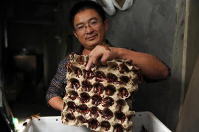 Beternak Kecoak, Pria Ini Kantongi Rp 135 Juta Per Bulan