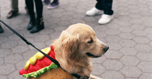 Here are dogs that are better dressed than you