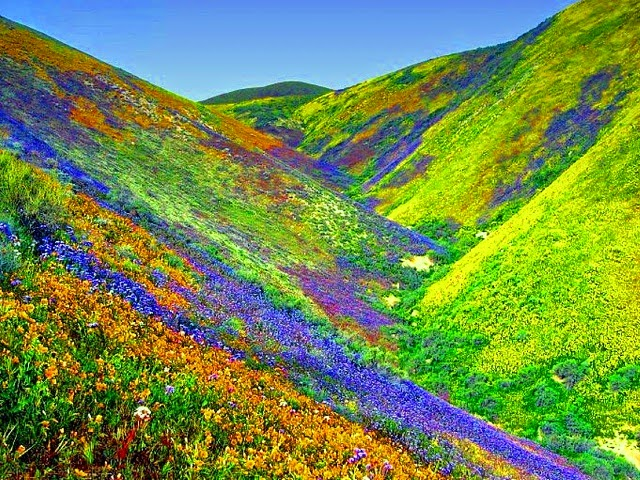 Valley of Flowers National Park : UNESCO World Heritage Sites in India