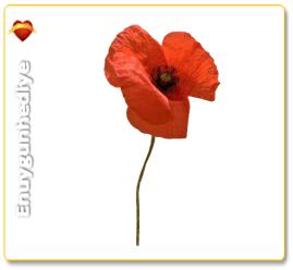 Gelincik Çiçeğinin Anlamı Nedir?