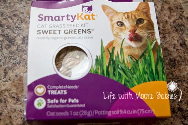 Cat grass kids can grow