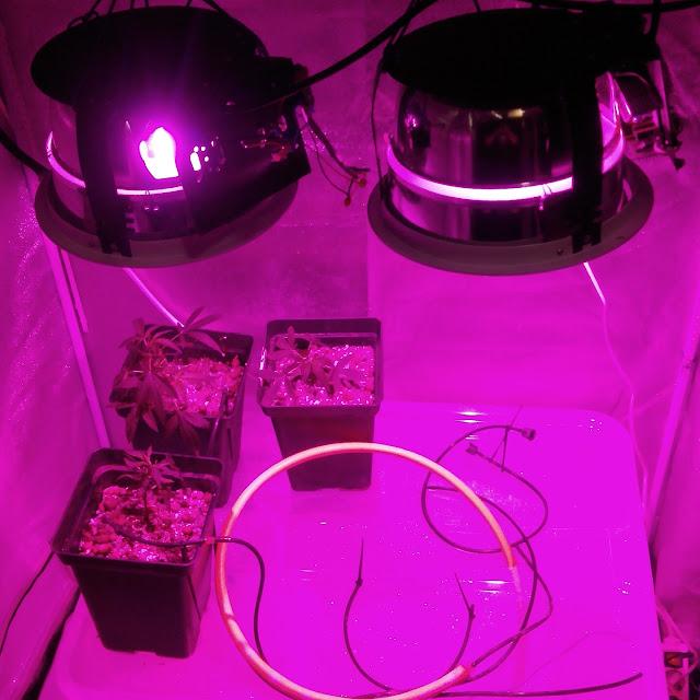 En esta foto vemos dos led cada uno de 50w instalados en carcasas antiguas de fluorescentes con cristal termico que vienen muy bien para las salpicaduras de agua