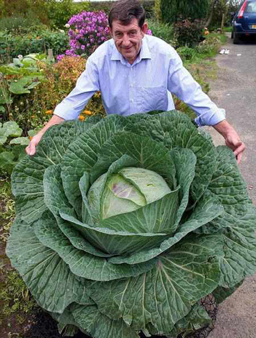 Large Vegetables 43