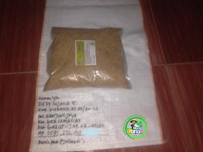 Benih pesanan  DEDY SUJANA E Garut Jabar  (Sebelum Packing)