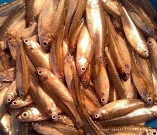 Ikan wader pari juga di kenal dengan sebutan ikan lunjar pari, lunjar padi, lunjar andong , paray , cecereh, ikan cere , pantau, seluang , ikan bada
